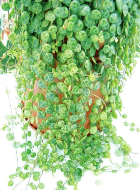 Цветы растения семена удобрения